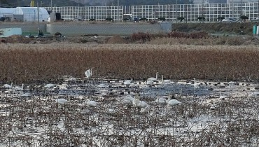 1.5 mln Migratory Birds Inhabit 200 Major Swamps Across S. Korea