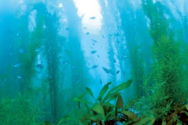 S. Korea to Allocate 60.3 bln Won in 2019 to Create 'Underwater Forests'