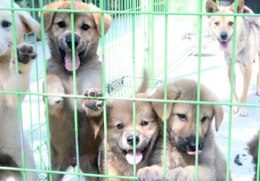Gangneung Expanding Shelter for Abandoned Dogs