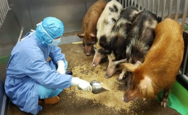 S. Korea Examines Possibility of World's First Porcine Transplant on Humans