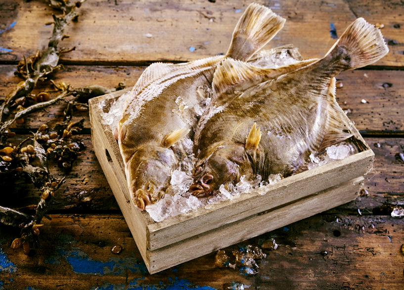 Two fresh flatfish displayed in a crate of ice