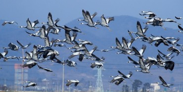 Like Migratory Birds, Humans Also Capable of Finding North