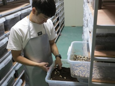 Okcheon County Turns to Insects as a New Food Source