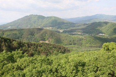 'Streets Without Cars' in Gwangneung Forest