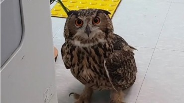 Eagle Owl 'Apprehended' by Police After Feeding on 11 Chickens at Poultry Farm