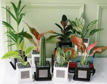 Growing Plants Indoors can Improve Air Quality: Study