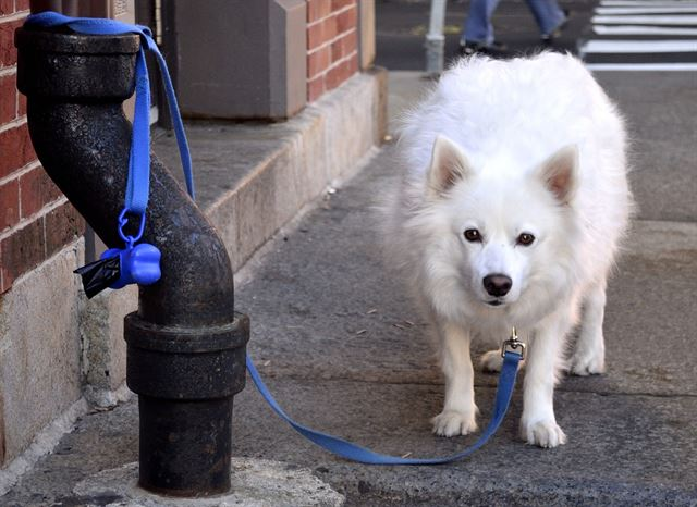 Owners of Fierce Dogs Will Pay Fines if Compulsory Education Not Completed