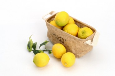 S. Korea to Start Supplying Domestically Grown Lemon Trees