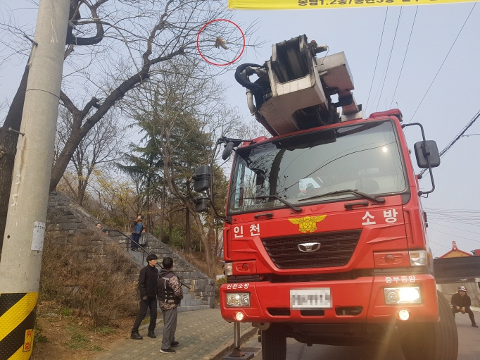 Cat Stuck in Tree for Three Days Rescued from Incheon Park