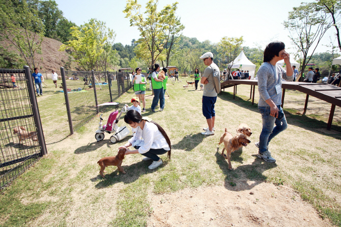 Animals Not Immune to Fine Dust Struggles in S. Korea