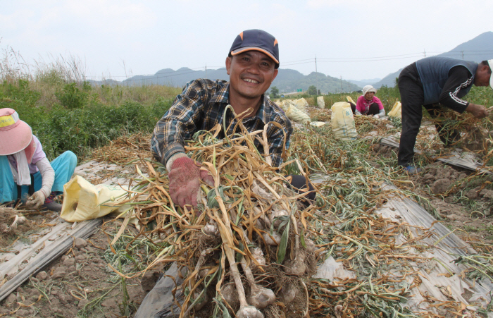 The government is sending foreign workers with short-term visas to work in rural towns during the farming season. (Yonhap)