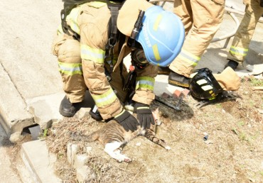 Korean National Fire Agency to Educate Firefighters on Pet Resuscitation