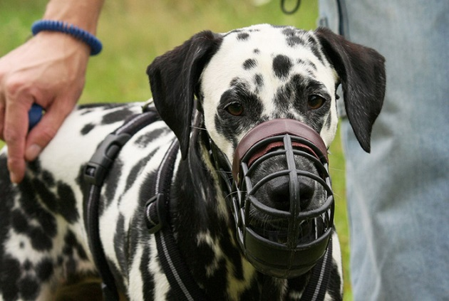 A Controversy over Putting Mouth-muzzle on a Large Dog