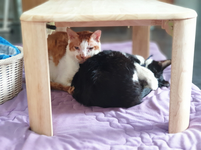 Cats living here have been rescued by local governments or animal rights groups in nearby areas. (image: Senior Cat Center)