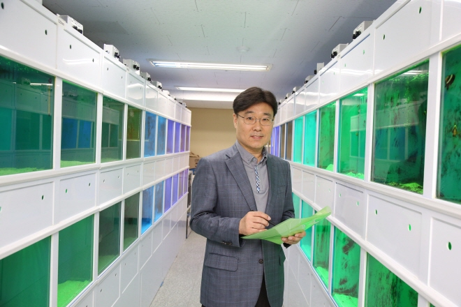 The team showed that the concentration level of active oxygen, a stress agent, was 57 percent lower among goldfish exposed to green light waves for four weeks than others that were not. (image: Korea Maritime and Ocean University)
