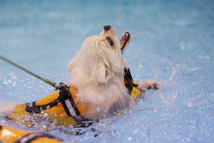 Gwangju to Host International Swimming Championship for Dogs