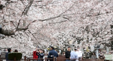 S. Korea's Largest Cherry Blossom Festival Kicks Off on April 1st