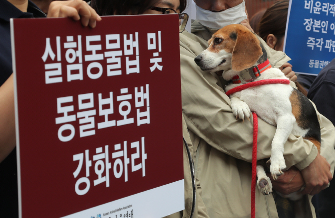 Animal Advocacy Group Calls on Government to Save Beagles from Lab Experiments