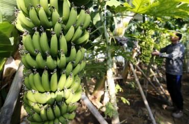 Provincial Gov't Develops Master Plan for Cultivating Subtropical Plants