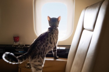 VistaJet Launches Global Pet Travel Program as it Sees a 104 pct Increase in Animals Flying