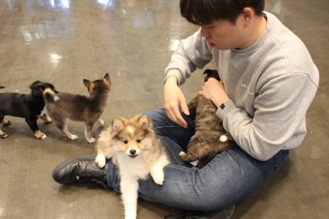 50,000 Won in Gifts for Those Who Adopt Abandoned Pets