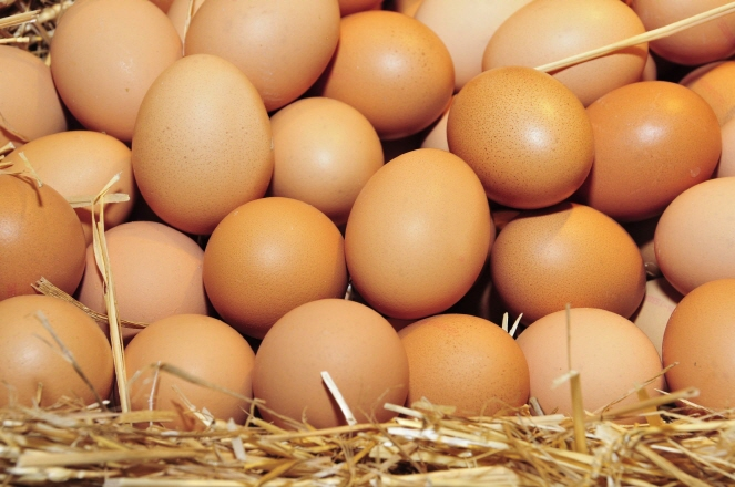 Egg's Freshness Checkable via Smartphones: Institute