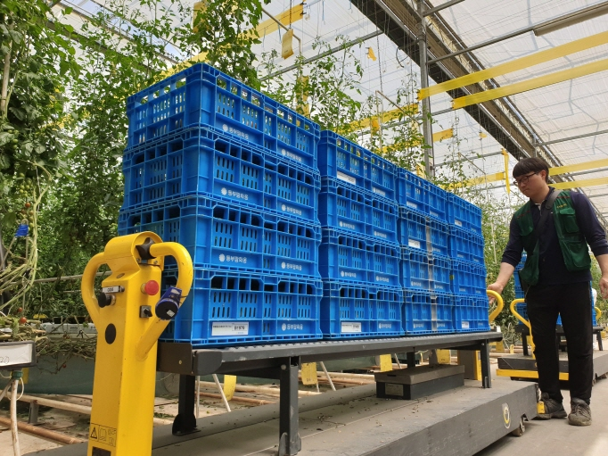 A worker walks with an automatic cart at a tomato greenhouse equipped with smart farming technologies in Hwaseong, south of Seoul. (Yonhap)