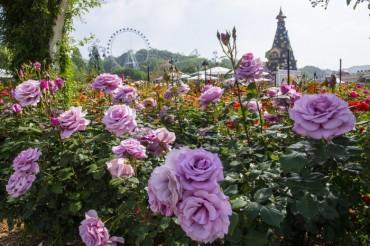 New Rose Garden Highlight of Everland's 35th Rose Festival