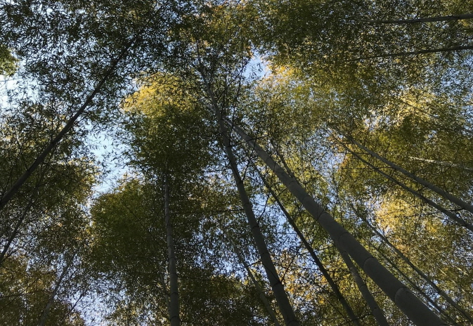 Phytoncide Levels in Bamboo Forests Seven Times Higher than in Urban Areas