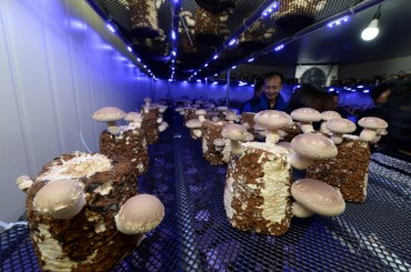 Urban Mushroom Farms Expanding in Gwangju