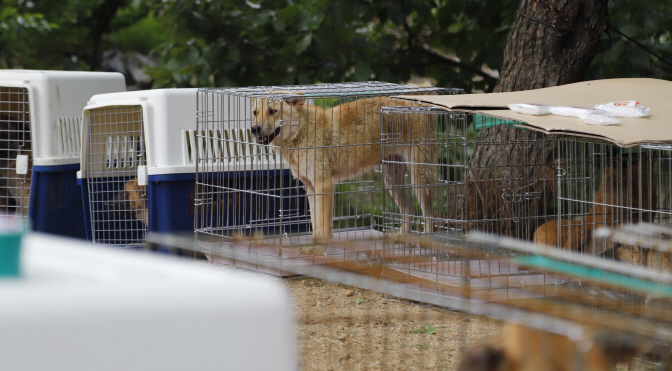The activists claimed that they had rescued 64 dogs that were left unattended at a farm in Yangsan, South Gyeongsang Province, but that animal shelters are already full and cannot accommodate additional abandoned pets. (Yonhap)