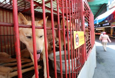 Dog Meat Market Disappears into History Amid Concerns over Animal Abuse