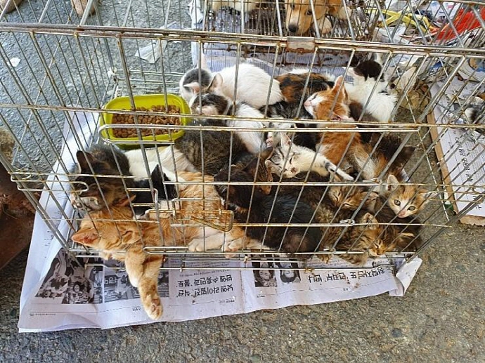 Animals at Damyang Market. (image: Civic Group)