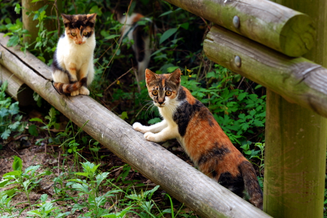 There are currently 597 reconstruction sites in Seoul, where a number of stray cats are known to have taken up abode. (Yonhap)