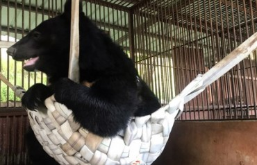 Animal Group Presents Hammocks to Caged Bears