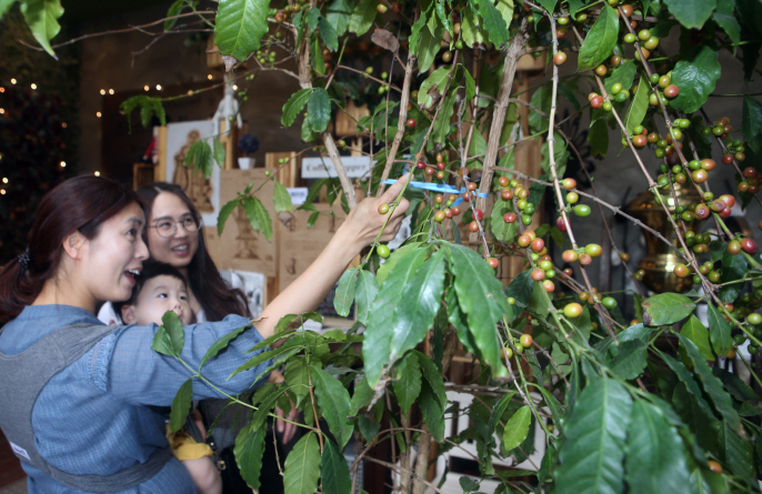 Amid Coffee Boom, Researchers Search for Variety That Can Grow in S. Korea