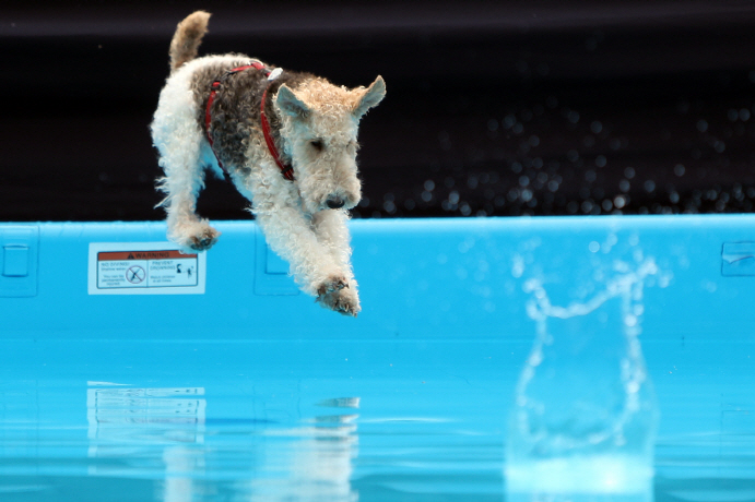Canine 'Athletes' Make Splash at Gwangju Swimming Competition