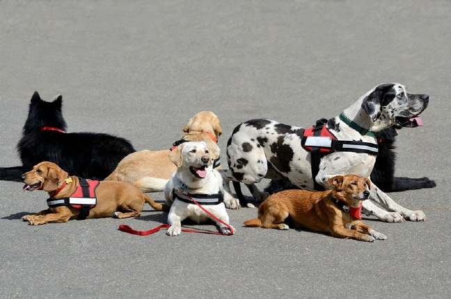 The ministry will consider a mandatory law which dictates that owners hold a dog's leash, and could also make it mandatory for owners to hold their dog inside apartment complexes in places such as elevators. (image: Korea Bizwire)