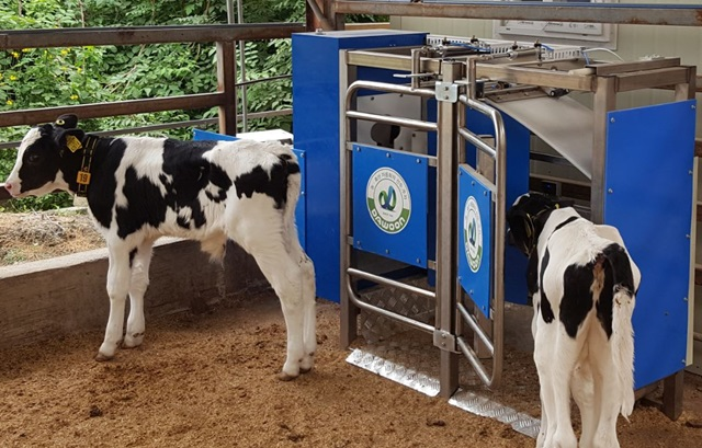 Automated Calf Feeders Popular in Ulsan