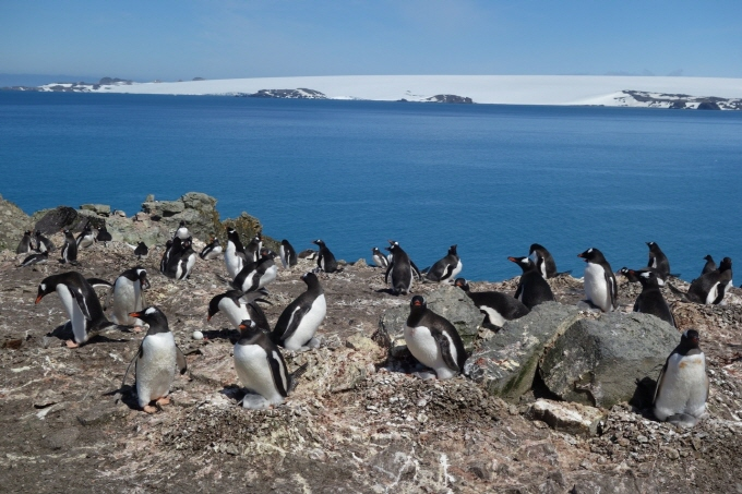 Gov't Proposes 2nd Specially Protected Area for Penguins in Antarctica