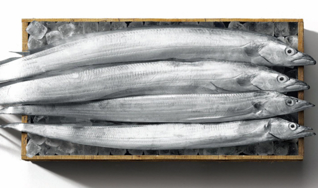 Cutlassfish live in warmer subtropical currents of the south coast of the Korean peninsula including Jeju Island and the neighboring seas. (image: E-Mart)