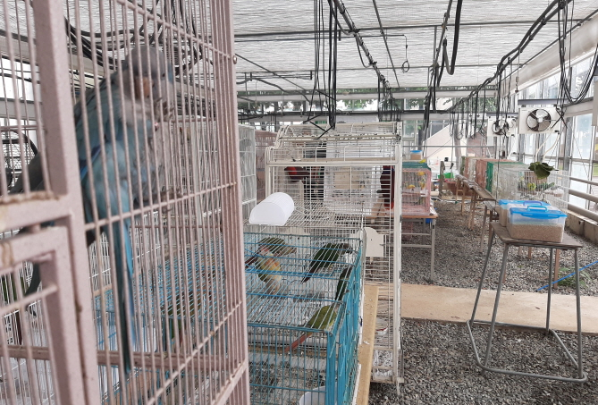 Animals saved from a fire last Sunday are recovering in a greenhouse at the county's agricultural technology center. (image: Jangseong County Office)