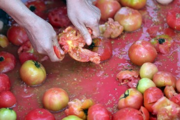 Hunt for Golden Rings Underway at Hwacheon Tomato Festival