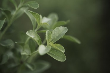 PureCircle Granted Key Stevia Reb M Patent in China