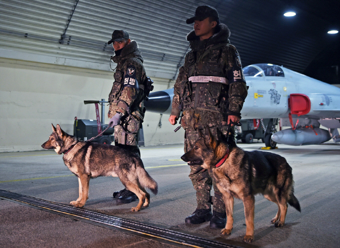 Military working dogs take part in nighttime patrol training at the Air Force's 18th Fighter Wing in Gangneung, Gangwon Province, on Jan. 18, 2018. (image: Air Force)