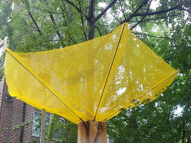 Songpa District Declares War on Odorous Ginkgo Nuts