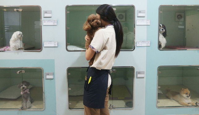 Some customers disappear after bringing their pets in for styling, while others fail to show up even after the accommodation period has expired. (Yonhap)