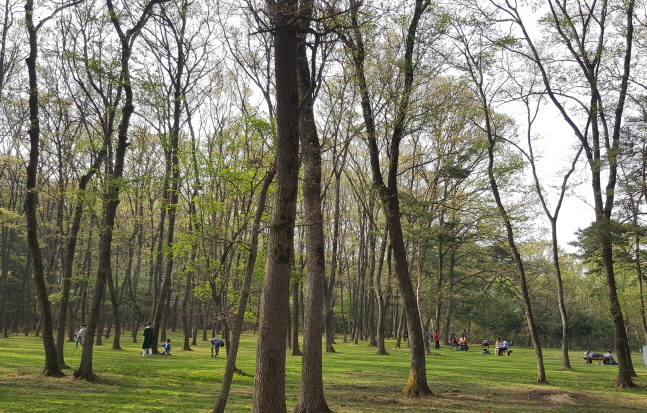 S. Korean Forests Have Public Interest Value of 221 tln Won