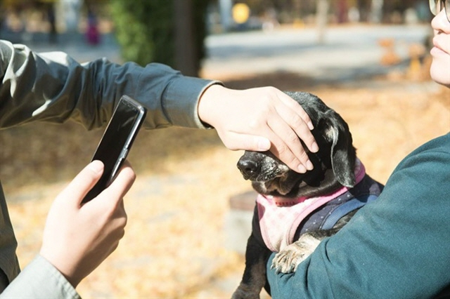 The goal of the research project is to develop a new method to register companion animals using biometrics that can be used in line with the government's animal protection management system. (image: Petslab)