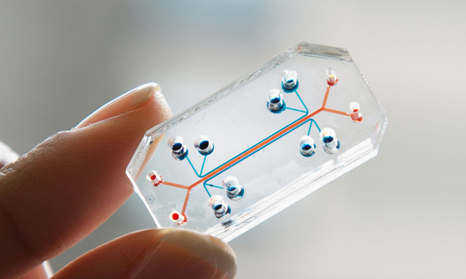 The United States and other advanced nations have organ chips for certain disease models in the commercial market. (image: Wyss Institute)